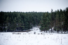 Forest. A cold winter day at the countryside Stock Images