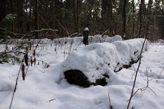Forest in cold winter day Royalty Free Stock Photos