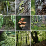 Forest Collage fotografering för bildbyråer