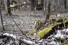 Forest Color Contrast arkivbild