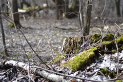 Forest Color Contrast. Moos and forest stock photography