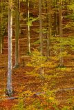 Autumn forest sunshine Royalty Free Stock Photography