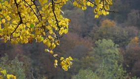 forest with colorful foliage on sunny autumn day stock video footage