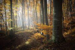 Forest with colorful leaves in autumn Royalty Free Stock Photo