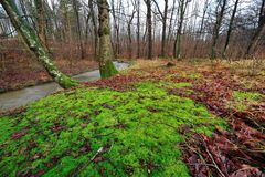 Forest with colorful leaves and moss Stock Photography