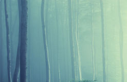 Forest with colorful trees and fog in the morning Royalty Free Stock Images