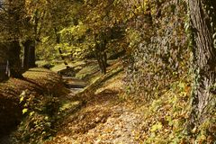 Forest in the colors of autumn royalty free stock image