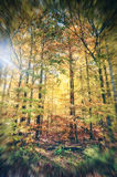 Forest colors in the autumn season. Walking through the forest in the autumn season Royalty Free Stock Photography