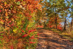 Forest Colors in the Fall in hdr Royalty Free Stock Images