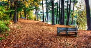 Forest Colors in the Fall in hdr Royalty Free Stock Photos