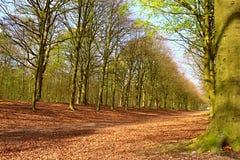Forest Colors Leaves och Forest Nice Trees royaltyfria bilder