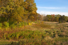Forest Colors nella caduta nel hdr Fotografia Stock Libera da Diritti