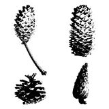Forest cones. Spruce and pine cones. Black imprint. Royalty Free Stock Photo