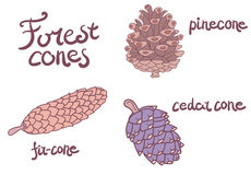 Forest conifer cones set Royalty Free Stock Photography