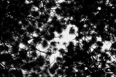 Forest contrast. Contrast in the forest trees and branches royalty free stock photography
