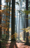 Forest in contrejour lighting Stock Images