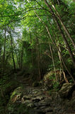 Forest  in Costa verde mountains Stock Images