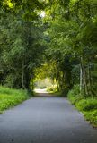 Forest country road Royalty Free Stock Photography