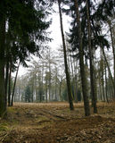 Forest in countryside Stock Photography