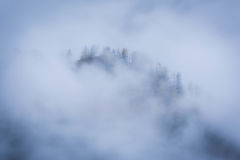 The forest covered with fog. Beautiful forest covered by a milky fog Stock Photo