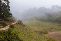 Forest covered fog. Royalty Free Stock Photography