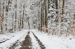 Forest covered with light wet snow Stock Photography