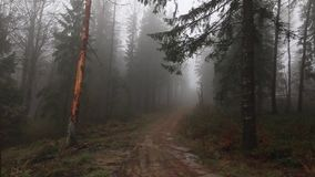 Forest covered in Mist. HD footage. Misterious woods in European Mountains stock footage
