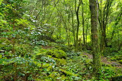Forest covered with moss Royalty Free Stock Image