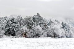 Forest Covered With Snow Imágenes de archivo libres de regalías