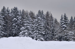 Forest covered by snow Stock Images