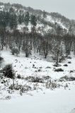 Forest covered by snow. Forest on a hill in northern Greece covered by snow during snowfall Stock Photos