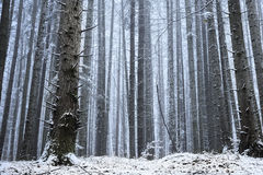 Forest covered in snow during winter Royalty Free Stock Images