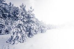 Forest Covered vid insnöat vinterlandskap Royaltyfri Bild
