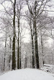 Forest Covered With Snow Stock Photo