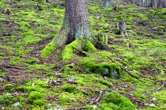 Forest covers moss Royalty Free Stock Photo