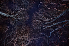 Forest, cozy fire and blue night sky Stock Photo