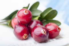 Forest cranberries with leaves Royalty Free Stock Images