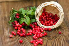 Forest cranberry lying on a wooden table Stock Photography