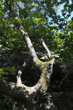 Forest creature at Elfs Cave, Thassos, Greece. The Elfs Cave is a strange formation of rocks and trees Stock Photography