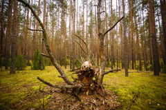 Forest creature. In the moss Royalty Free Stock Photo