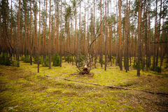 Forest creature. In the moss Stock Photography