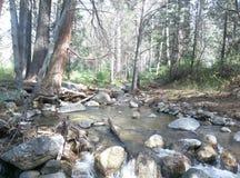 Forest Creek fotografía de archivo libre de regalías