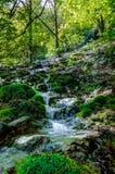 Forest Creek imagem de stock royalty free