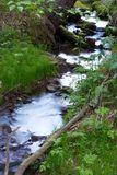Forest and creek Royalty Free Stock Images