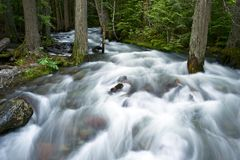 Forest Creek Royalty Free Stock Photography