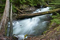 Forest Creek Royalty Free Stock Image