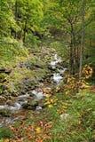Forest Creek Stock Fotografie