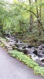 Forest Creek Lizenzfreie Stockfotos