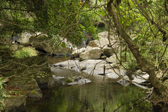 Forest Creek. Small creek in the middle of a forest en route to Bride's Pool at the North East Region of the New Territories in Plover Cove Country Park in Hong Royalty Free Stock Photo