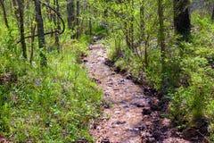 Forest Creek fotografia stock libera da diritti